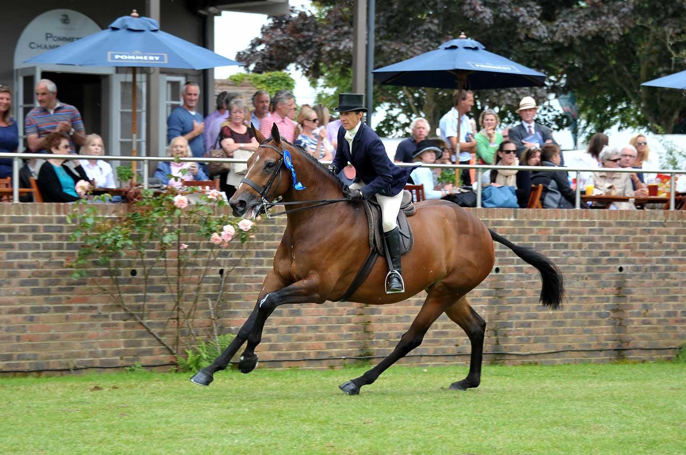 Planx Equestrian Photography - hi50606